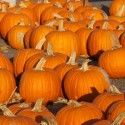 Fall Festivities at the Pumpkin Patch